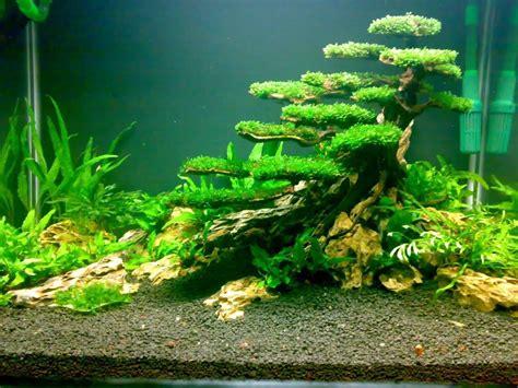 planted tank moss tree fish tank aquarium aquarium