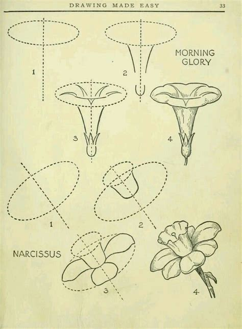 tromboni fiori 25 best ideas about flower drawing tutorials on