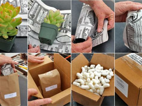 how to send succulents by mail world of succulents