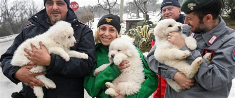 puppies rescued in italy 3 puppies found alive in italy avalanche survivors go home abc news
