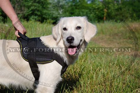 best harness for golden retriever order brand new harness walking harness