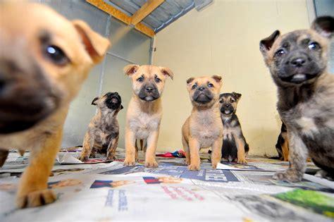 crossbreed dogs crossbreed dogs