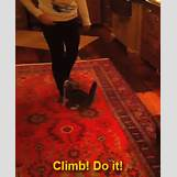 Taylor Swift Meredith Tumblr | 245 x 300 animatedgif 893kB