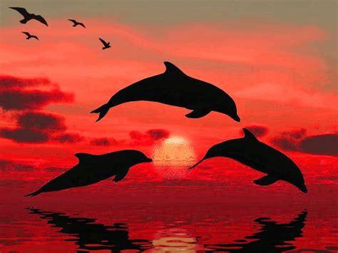 Sprei Sea Dolphine dolphins enjoying the sunset animation by aim4beauty on