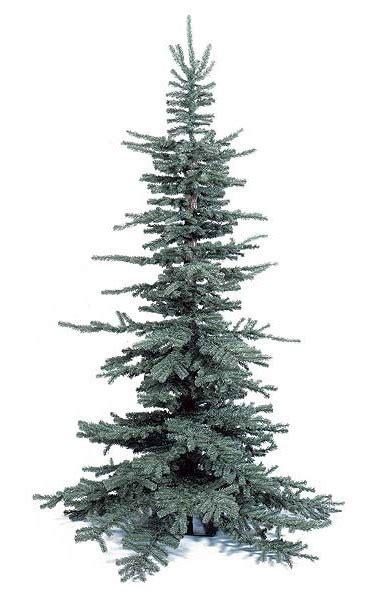 8 frasier pine tree