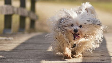 dogs wallpapers wallpapers hd puppy wallpaper free wallpapers