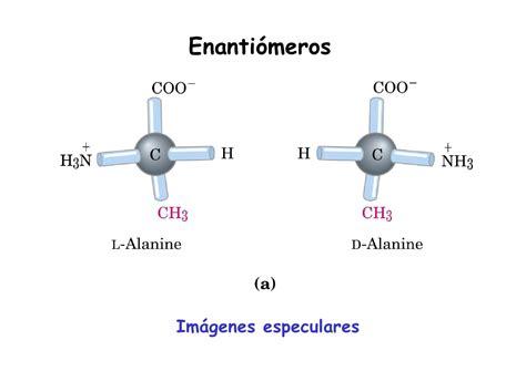 aminoacidos con cadenas alifaticas proteinas