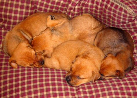 puppies their why dogs may kill their puppies pethelpful