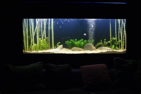 Bamboo Aquascape by Aquascaping With Lucky Bamboo New Discus Tank Wishlist