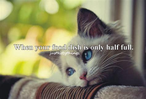 cat wallpaper with quotes cat meme quote funny humor grumpy kitten sad mood