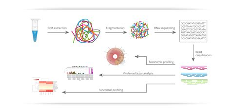 illumina genome sequencing illumina sequencing yun56 co