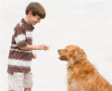 giving puppy pet sitting boy giving a treat 300x245 treating your pets picture to pin on