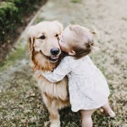 best house for golden retriever best 25 golden retriever wedding ideas on engagement photos