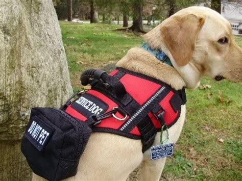 service for dogs 17 best images about k9 gear on for dogs service dogs and dobermans