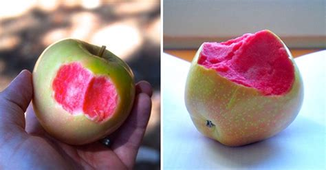 Parel Apel pink pearl apples are like fruit from another world photos