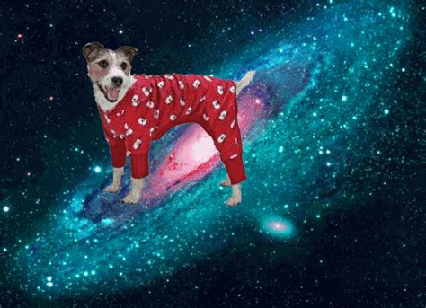 puppies in space dogs in space gifs wifflegif