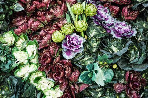 gambar desain vertikultur beberapa contoh desain taman sayuran terbaru biyanbbs com