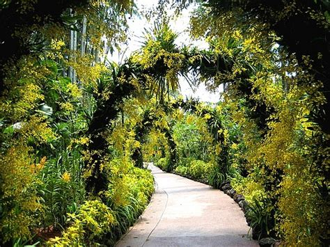 The Botanic Gardens Singapore Singapore S Metropolitan Attractions