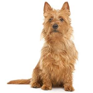 non shedding small mixed breed breeds picture
