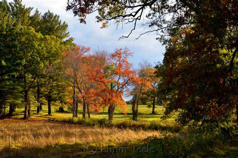 tree farms near appleton fall foliage lone tree appleton farms ipswich ma