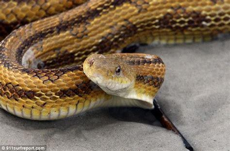 flöhe im bett florida rat snakes pictures impremedia net