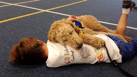 service dogs for autism autism service dogs