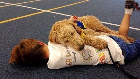 autism service dogs autism service dogs