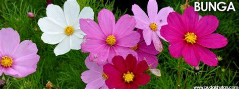Bukan Sembarang Bunga budakhutan bunga bukan nora budakhutan