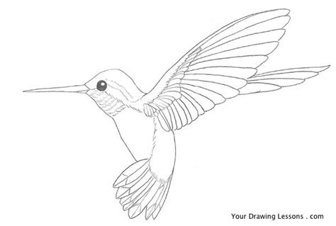 drawn hummingbird sketched pencil and in color drawn
