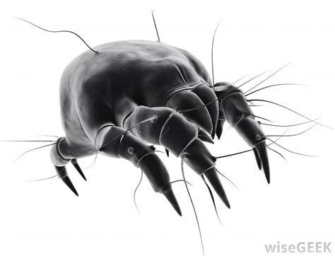 bed mites pictures what are bed mites with pictures