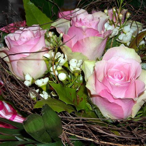 imagenes de rosen up rosen fotos