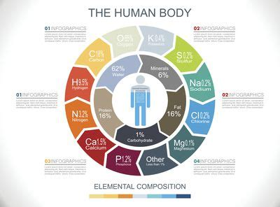Reading A Periodic Table Chemical Composition Of The Human Body