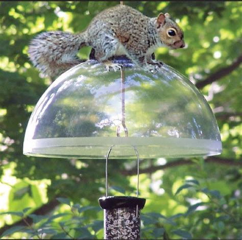 droll yankees sqbk 15in black squirrel guard bird feeder
