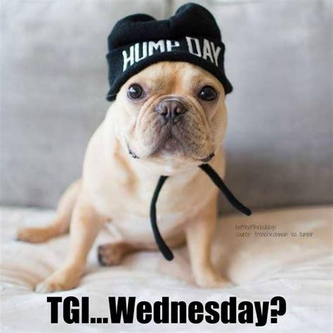 Bulldog Meme - 111 best frenchie memes images on pinterest meme memes