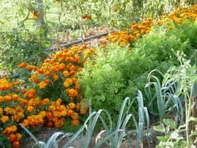 jardin compagnonnage principe avantages fleurs