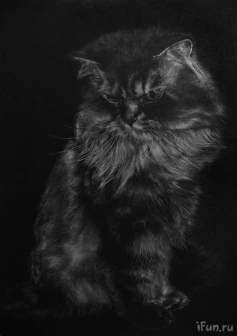 imagenes impresionantes de gatos impresionantes dibujos de gatos realizados a lapiz mundo