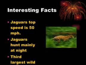 Facts About The Jaguar Jaguar Justin Banda 5