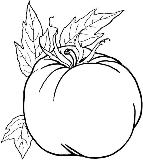 preschool coloring pages of vegetables tomato preschool coloring pages vegetables vegetables
