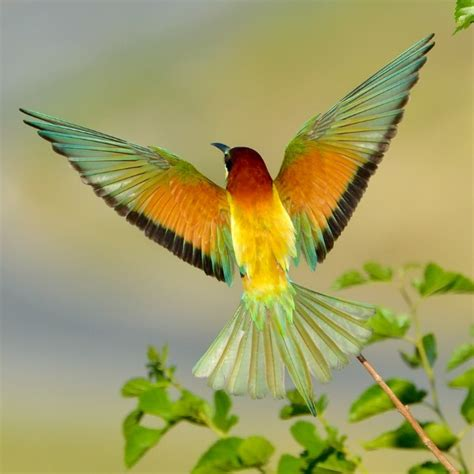 bee eater our world s view