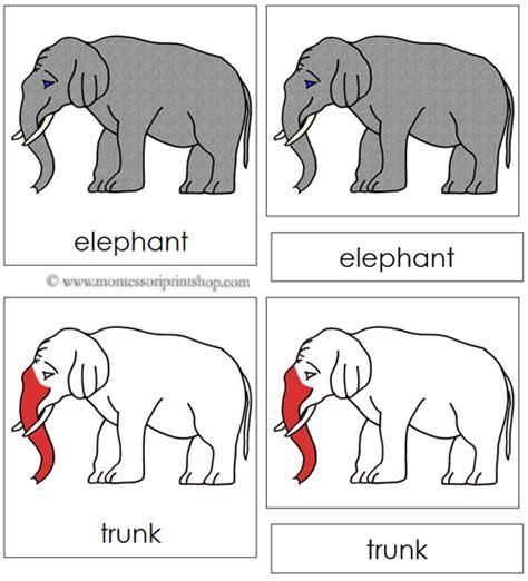 montessori nomenclature cards template elephant nomenclature cards montessori parts of an