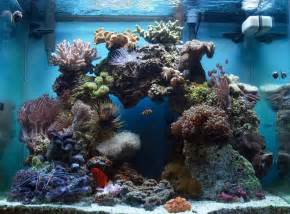 top aquascaping live rock reef tank images for