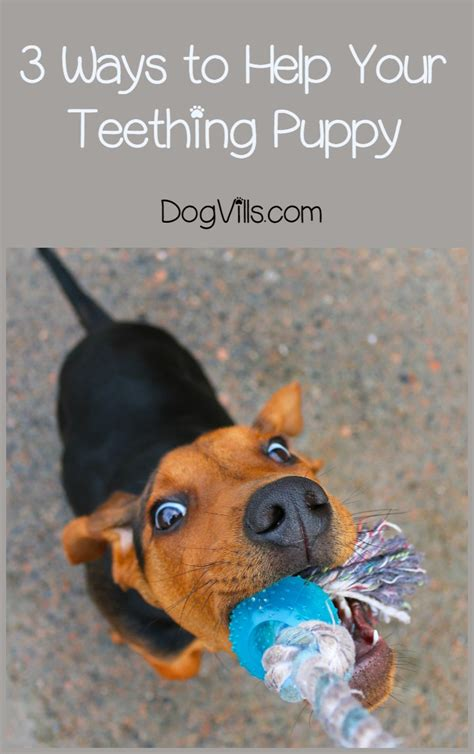 best for teething puppies what is the best way to help teething puppies dogvills