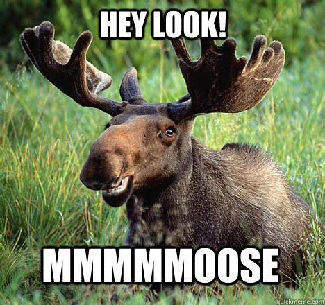 Moose Meme - hey look mmmmmoose moose quickmeme
