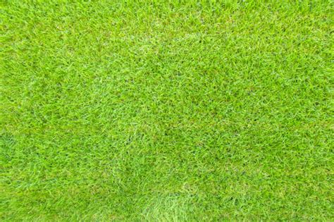 Grass Top by Top View Of Green Grass Background Texture Photo Free