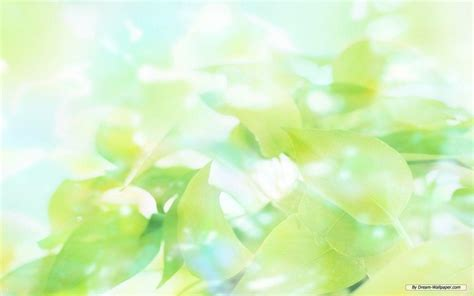 wallpaper green leaves on white background green leaves wallpapers wallpaper cave