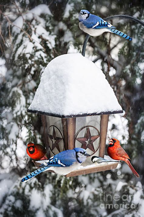 birds on bird feeder in winter photograph by elena elisseeva