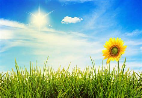 flowers sky nature light plant bloom hd wallpapers nature flower landscape grass sky sun light hd wallpaper