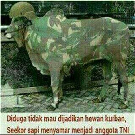 meme gambar lucu idul adha was was was was