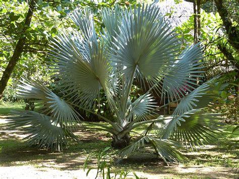 Palmen Winterhart Kaufen 1920 by Free Photo Palm Palm Trees Fan Palm Park Free Image