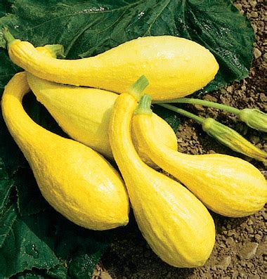 carbohydrates yellow squash crookneck squash nutritional facts how to cook recipes